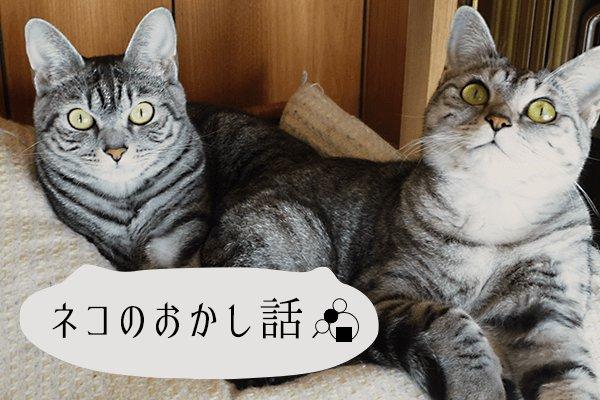 ネコのおかし話