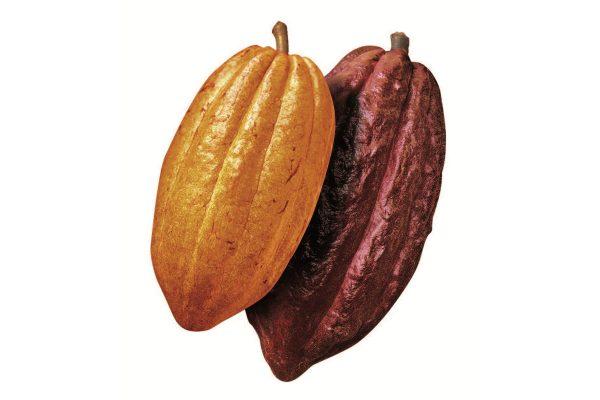 """強いチョコレート感と豊かなコクの""""ガーナ産""""、華やかな香りと上品な苦みの""""エクアドル産"""""""